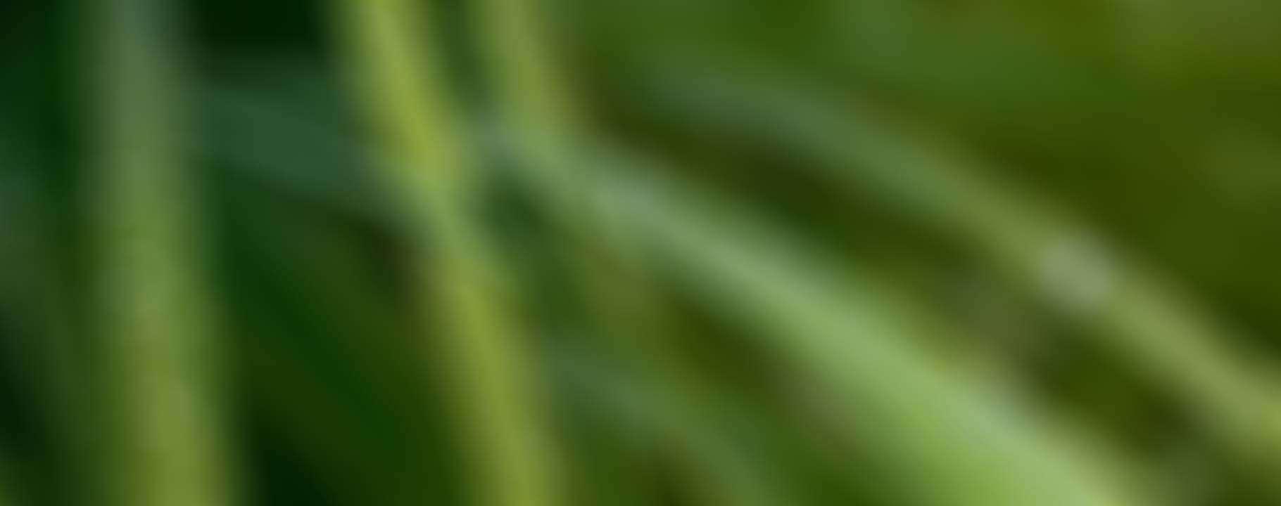 bg_test_02_grass
